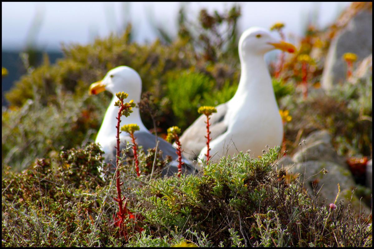 EXH.Seagulls Point Lobos 1306.010.DS_3043_2013 Resized.jpg