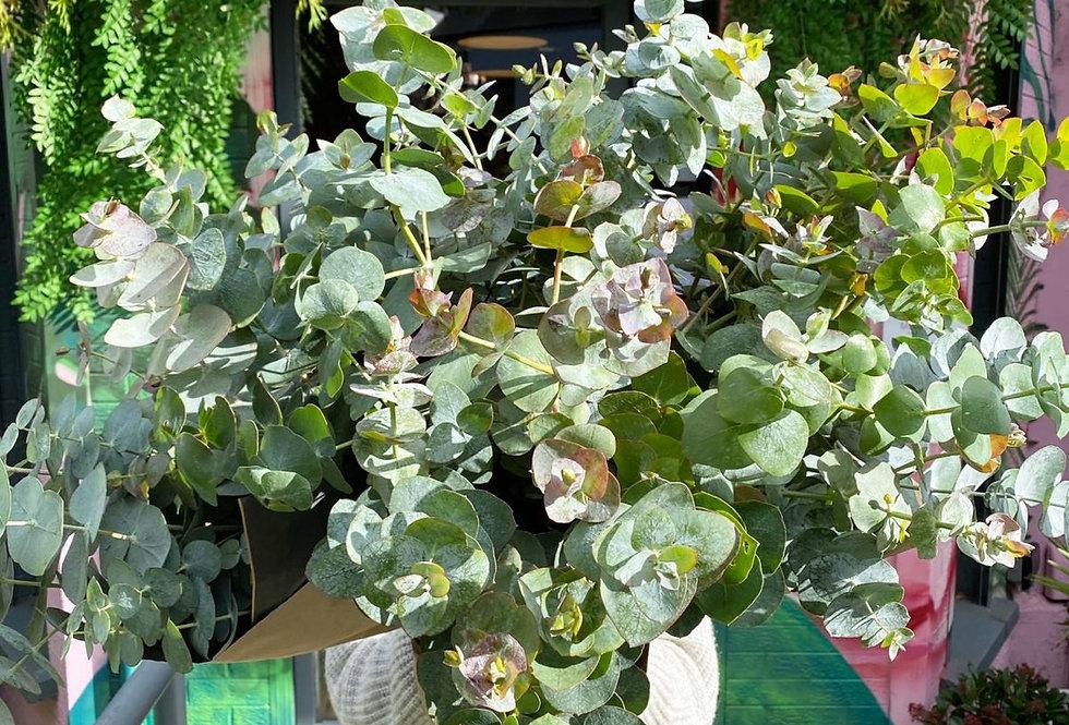 Eucalyptus Posy