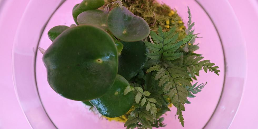 Mini Tropical Terrarium