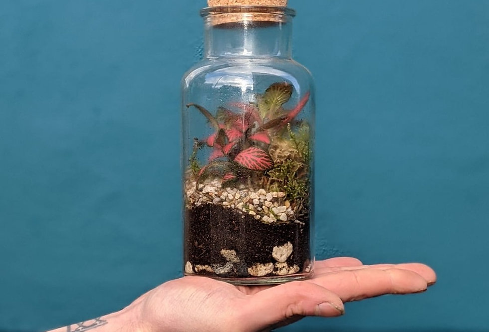 Tropical Bottle Terrarium