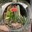 Thumbnail: Bottle Vase Terrarium