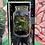 Thumbnail: Large Tropical Terrarium