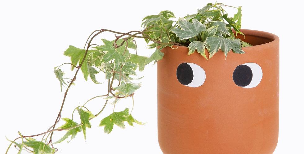 Leggy Terracotta Planter
