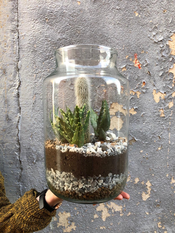 Desert Terrarium Plant Shop Memento Belfast
