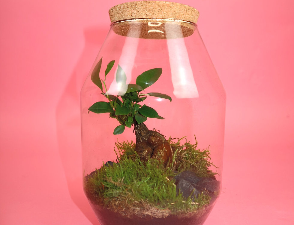 Tropical Indoor Garden Terrarium