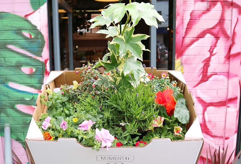 The Garden Box
