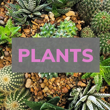 Plant Care.png