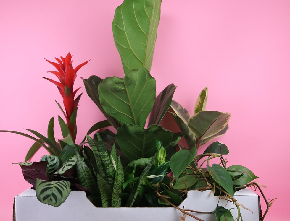 Plant Addict Box