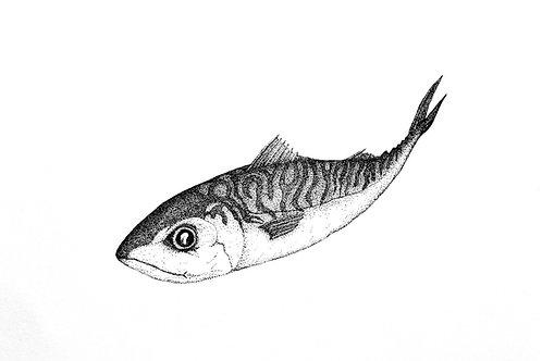 Mackerel print