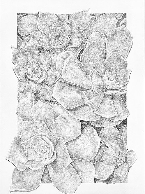 Aeonium Burst print