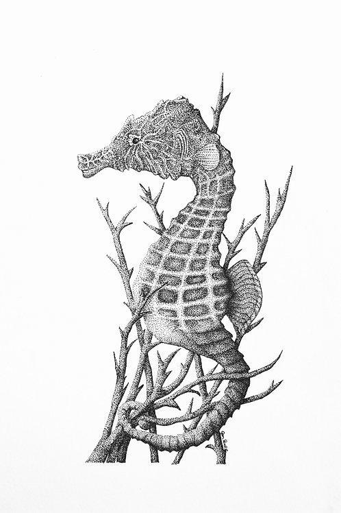 Hippocampus Hippocampus print