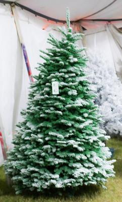 Green:White.jpg