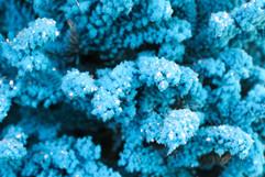 Blue Closeup 3.jpg