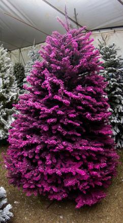 Black:Purple:Pink.jpg