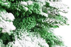Green:White Closeup.jpg