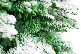 Green:White Closeup.jpg