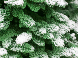 Green:White Closeup3.jpg