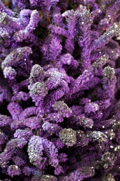 Purple:Black Closeup 2.jpg