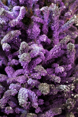 Purple:Black Closeup 2.jpg
