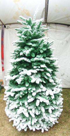 Green:White 2.jpg
