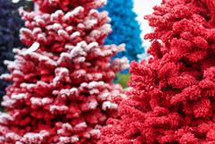 Red Trees 2.jpg
