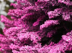 Black:Pink Closeup.jpg