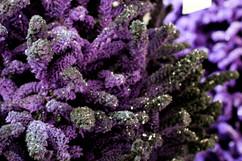 Purple:Black.jpg