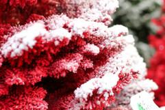 Red:White Closeup 2.jpg