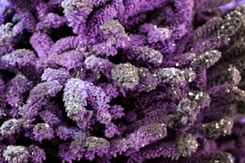 Purple:Black Closeup 3.jpg