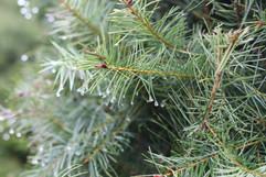 Tree -053.jpg