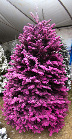 Black:Purple:Pink 2.jpg
