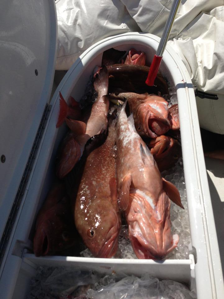 Siesta Key grouper fishing