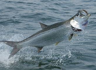 kingfish live bait charters smoker king