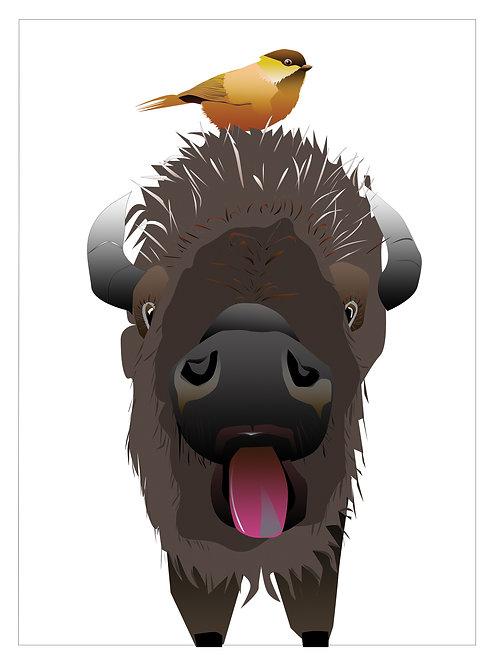Buffalo (Single Card)