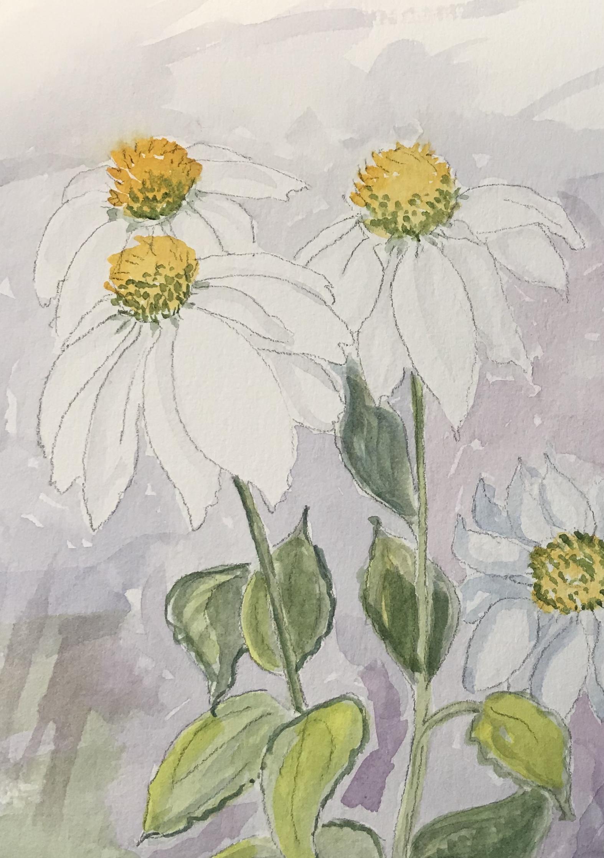 daisies in WC.jpg