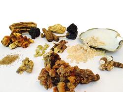 Herbs, Gums, Roots & Sea Shells