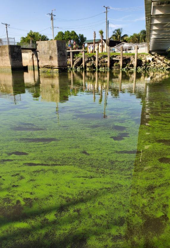 algal bloom spreads near Port Mayaca on Lake Okeechobee among HAB concerns