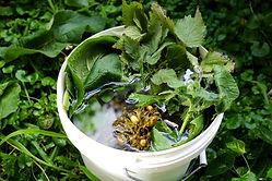 Making-seaweed-fertiliser-1.jpg