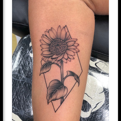 FINE LINE FLICK SHADED SUNFLOWER