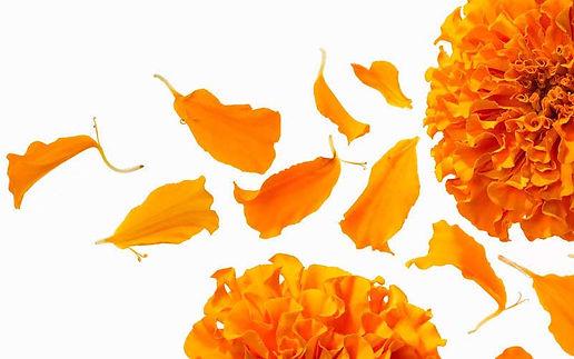 petals(1).jpg