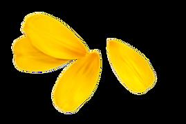 yellow-petals-png-1.png