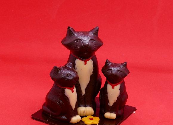 Le chat et ses chatons