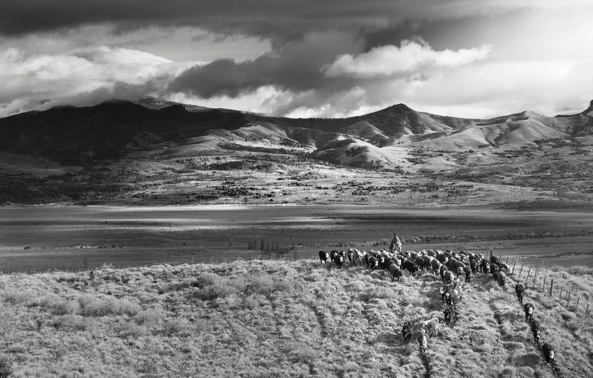 Arreo patagonico