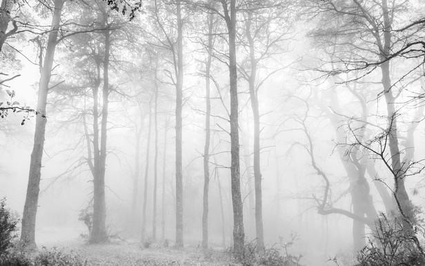 """""""Venas del bosque"""""""
