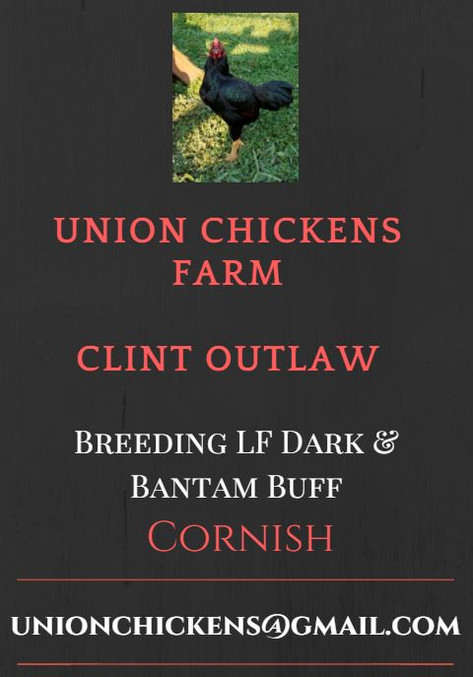 Ad Design for Yearbook, Website, Featured Breeder Ad or Poultry Press