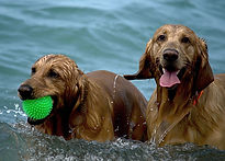 Happy beach dogs.jpg