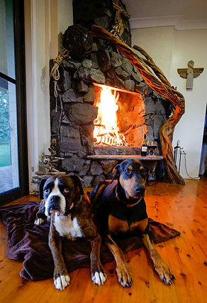 Dogs and fireplace at Sea Horse Diamond