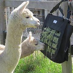 Alpacas and Hay Maximizer Feed Bag