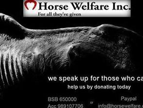 Muddy Creek Rain Gear & Horse Welfare Inc – Paying It Forward!