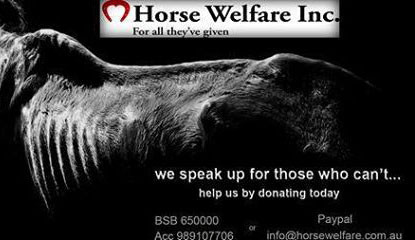 Horse-Welfare-Inc-c.jpg